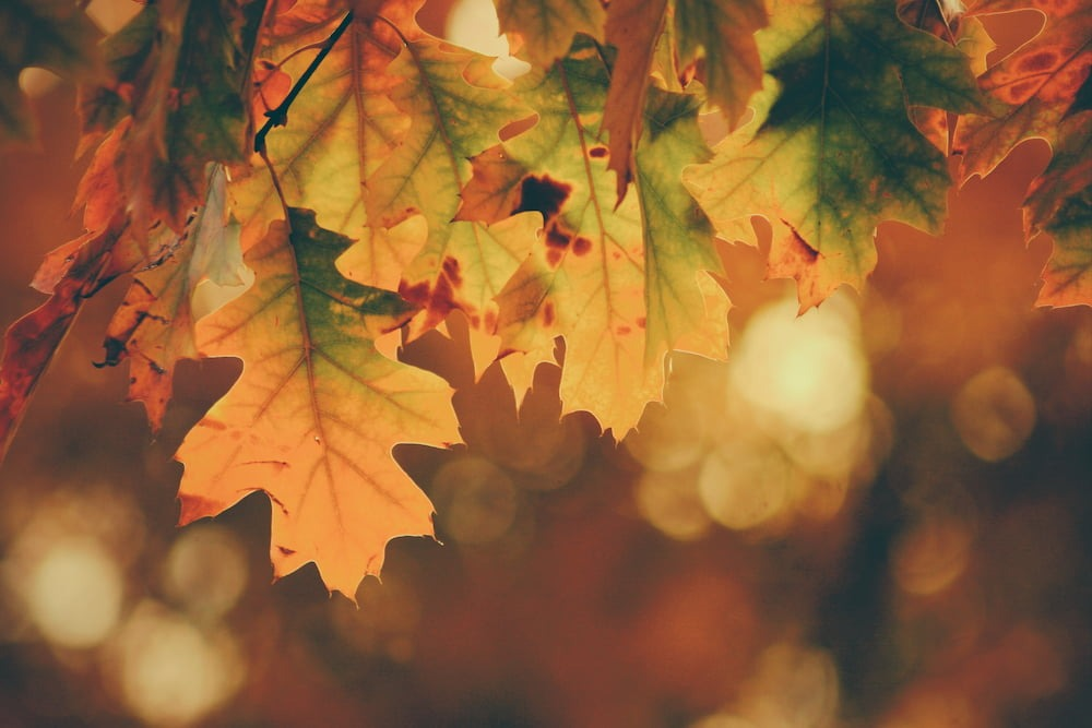 Leaf changing from summer to fall means it's time for seasonal storage