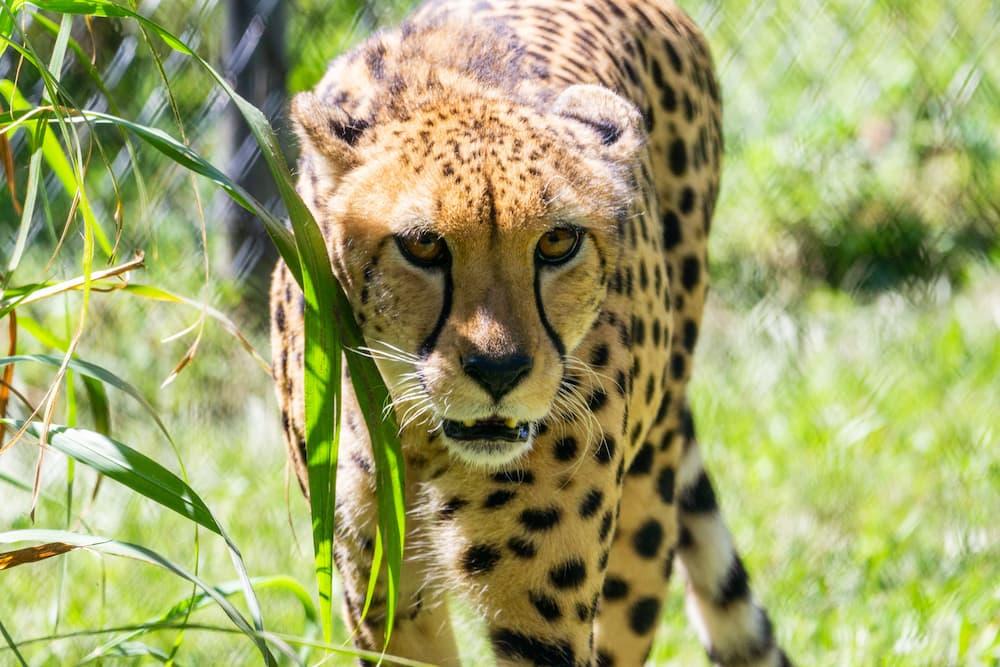 central florida zoo in Sanford FL
